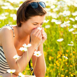 Tissues at the Ready - it's Hay Fever Season!