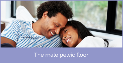 The male pelvic floor