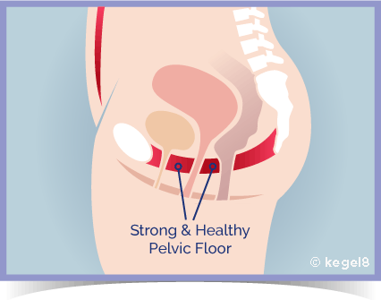 Kegel8 - A Strong and Healthy Pelvic Floor