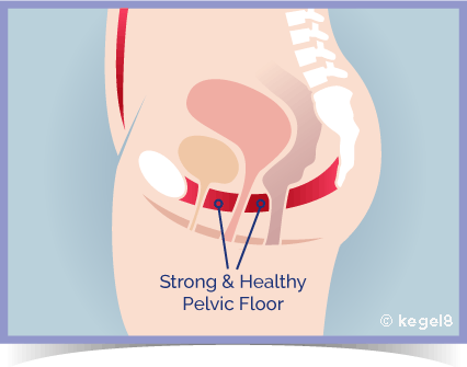 Strong Pelvic Floor Muscles - Kegel8